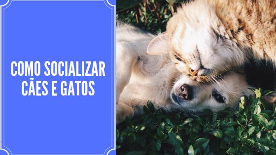 Como Socializar cães e gatos