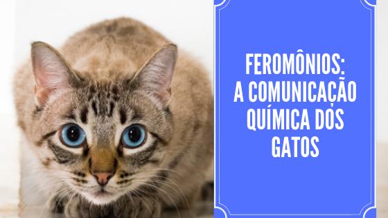 Feromônios: A comunicação química dos gatos