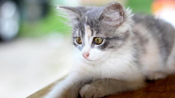 como tornar meu gatinho mais sociável