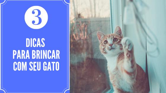 3 Dicas importantes para brincar com seu gato