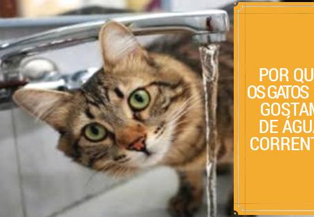 Por que os gatos gostam de água corrente?