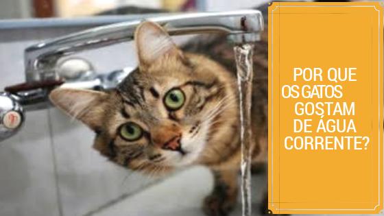 por que os gatos gostam de água corrente