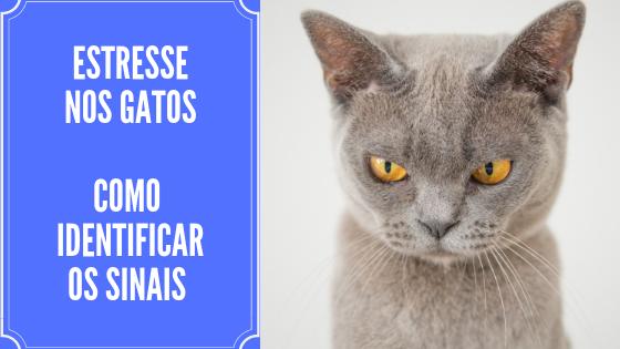 Como identificar sinais de estresse nos gatos