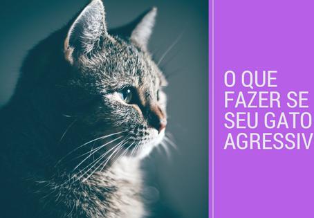 O que fazer se seu gato é agressivo?