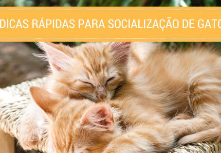 5 Dicas rápidas para socialização de gatos