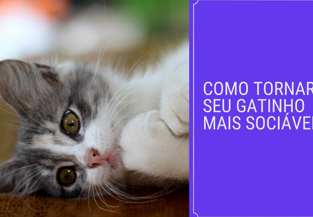 Como tornar seu gatinho mais sociável?
