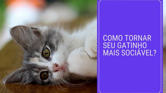 como tornar seu gatinho mais sociável