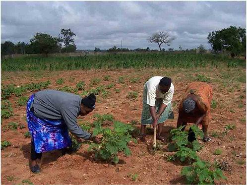 Verein Direkthilfe Nigeria