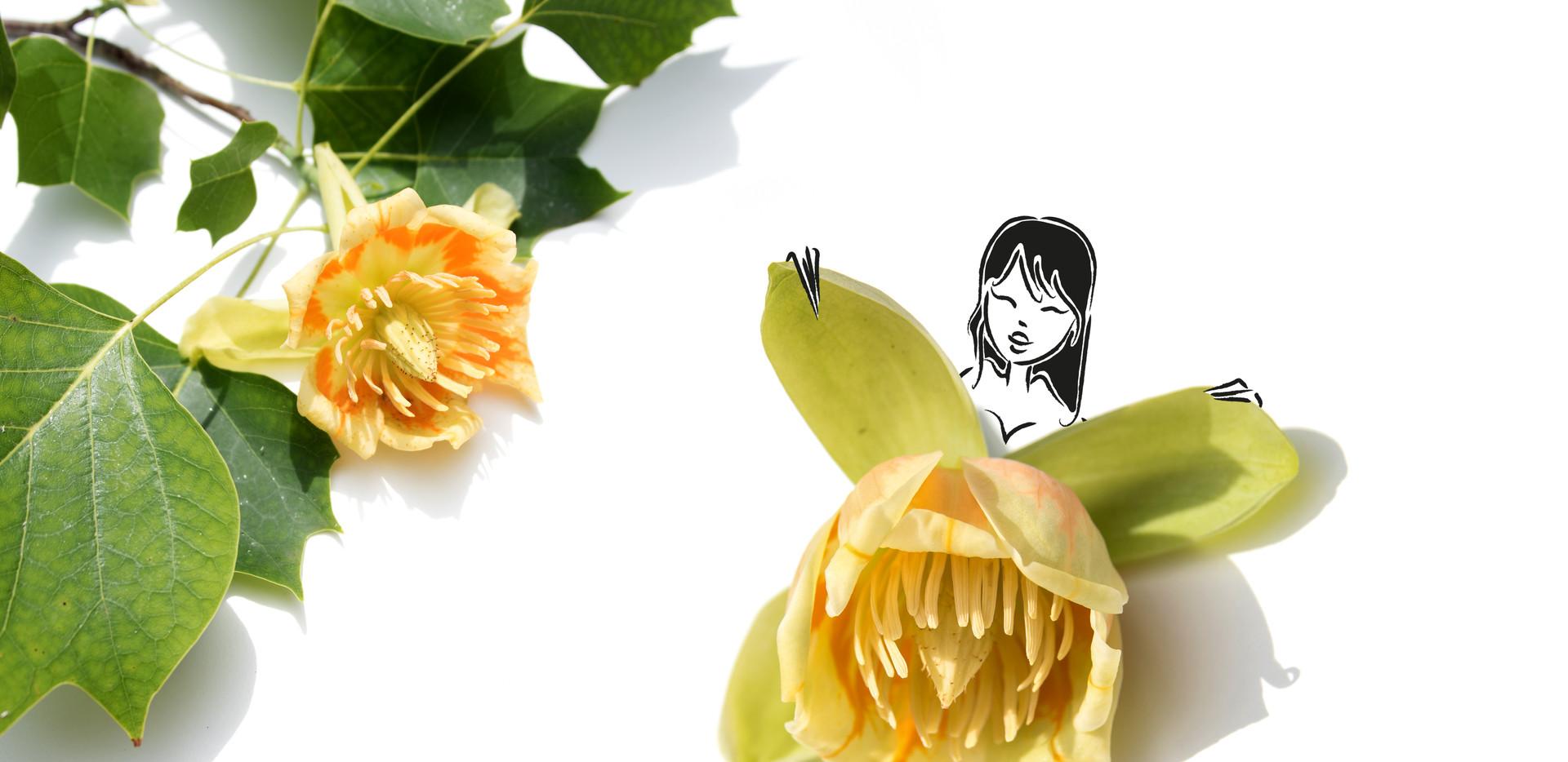 Virginie Tulipe