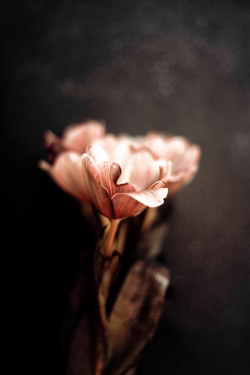 Floral study #1