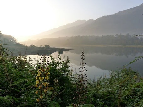 Morning_view_of_Malankara_Dam_reservoir_