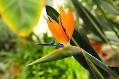 flower-4084731_1920.jpg