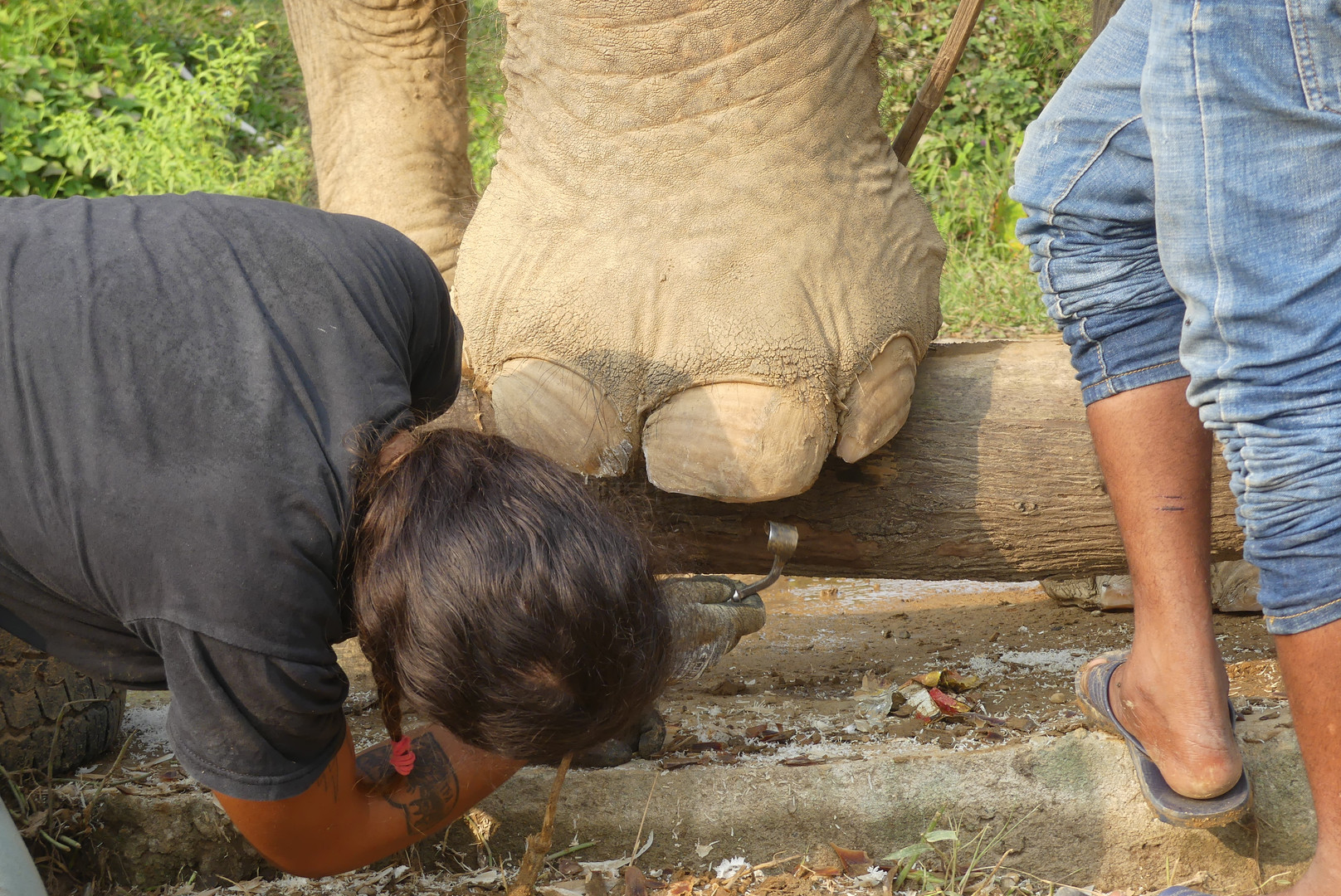 trimming nails elephant