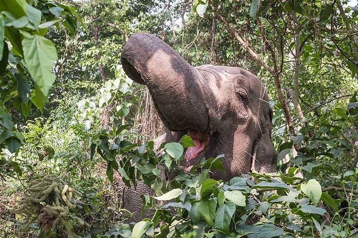 elephant happy hour nepal.jpg