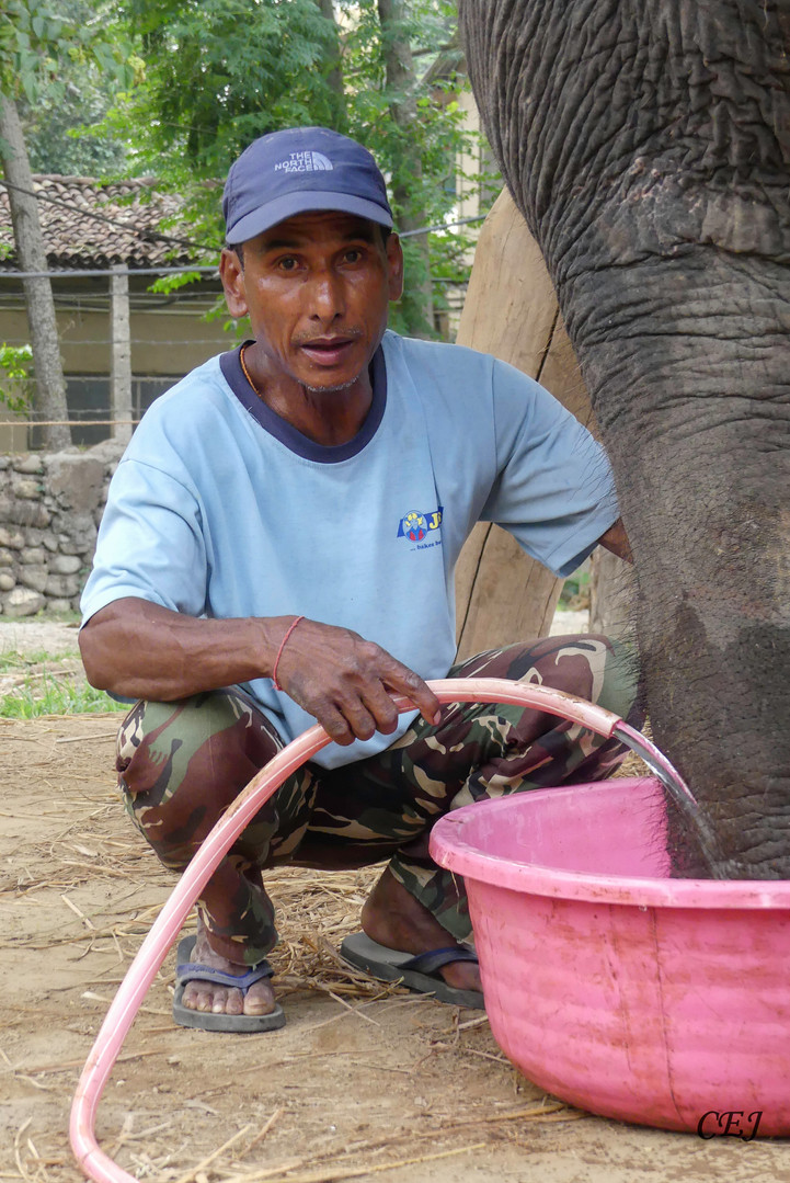 Help the mahouts to take care of their elephant
