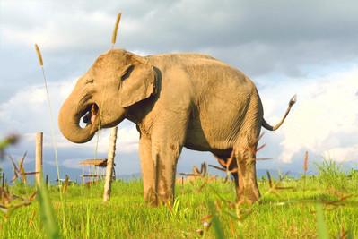 Stand Up 4 Elephants - Eva