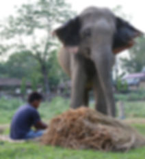 Stand Up 4 Elephants NGO Nepal Project Ramu