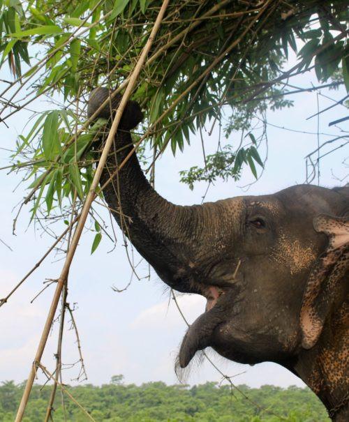 Rupa Elephant Happy Hour.jpg