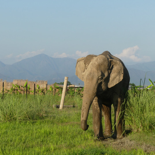 stand up 4 elephants.JPG