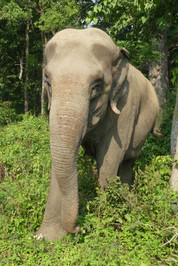 elephant happy hour.jpg