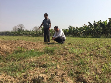 organic food elephant nepal
