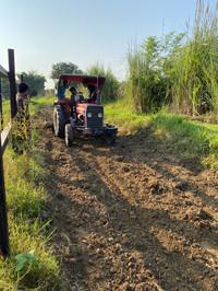 organic plantation su4e home