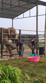 training for foot bath.jpg