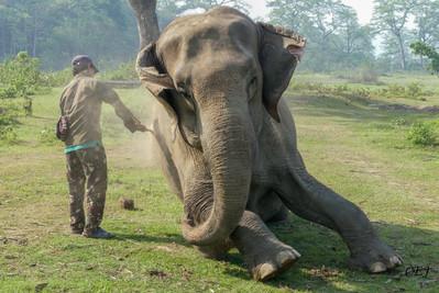 Elephant Happy Hour