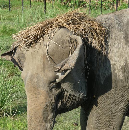 Eva rescued elephant.JPG