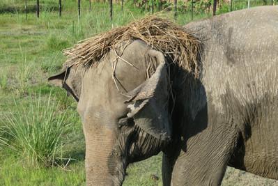 Eva rescued elephant