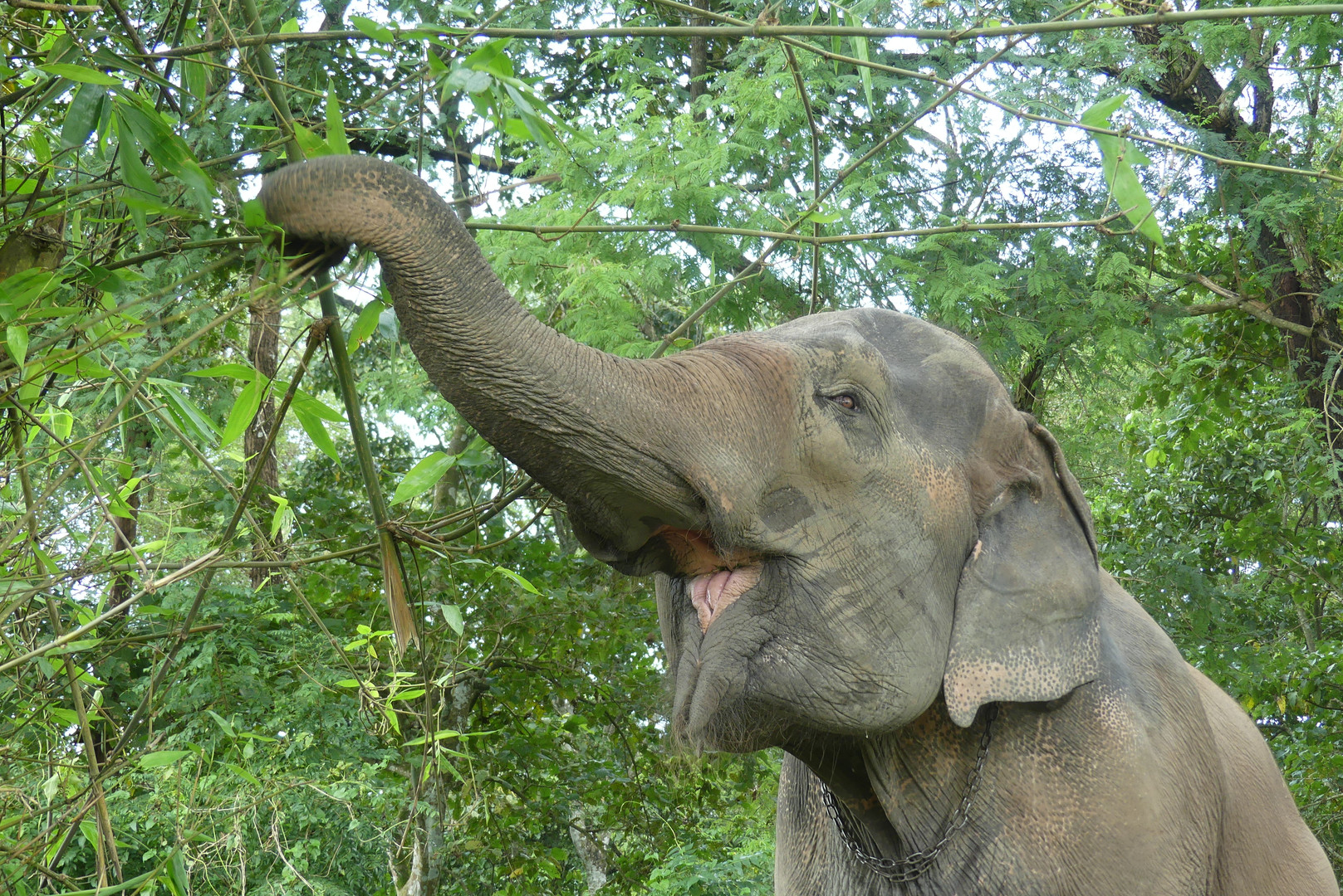 Tripadvisor Elephant Happy Hour