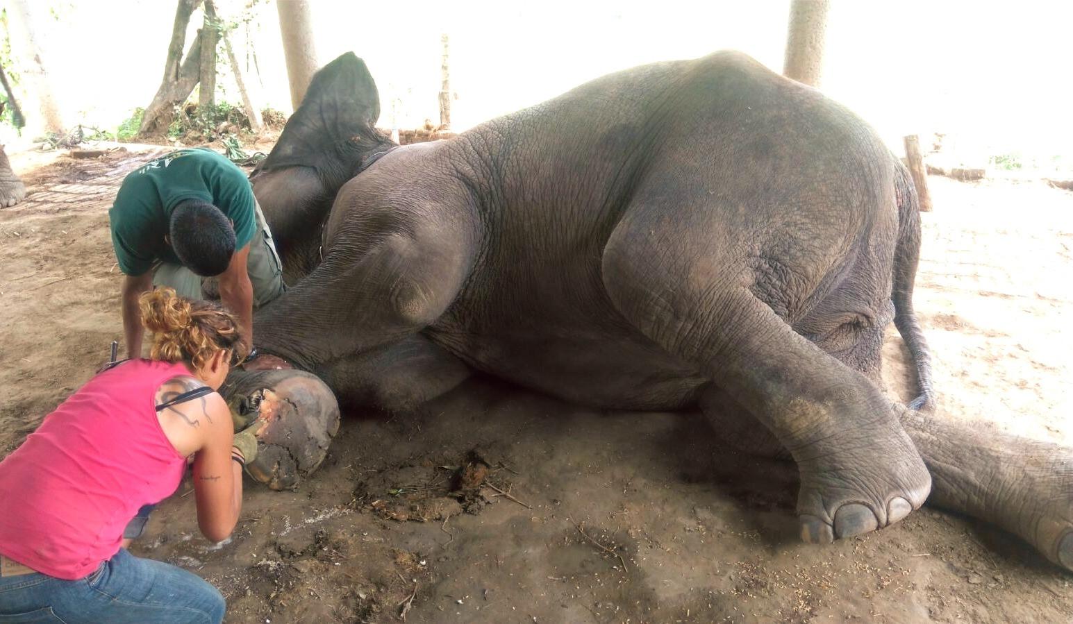 elephant welfare nepal.jpg