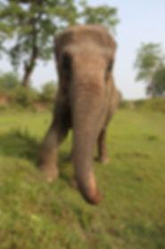 StandUp 4 Elephants