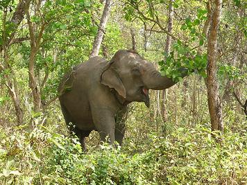 Lhamo rescue nepal elephant