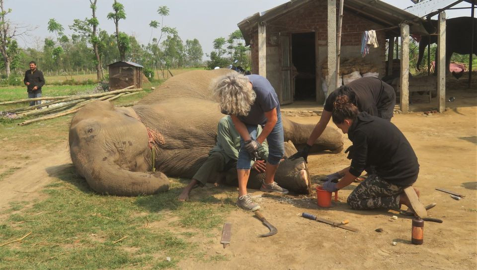 Foot care on elephants Nepal