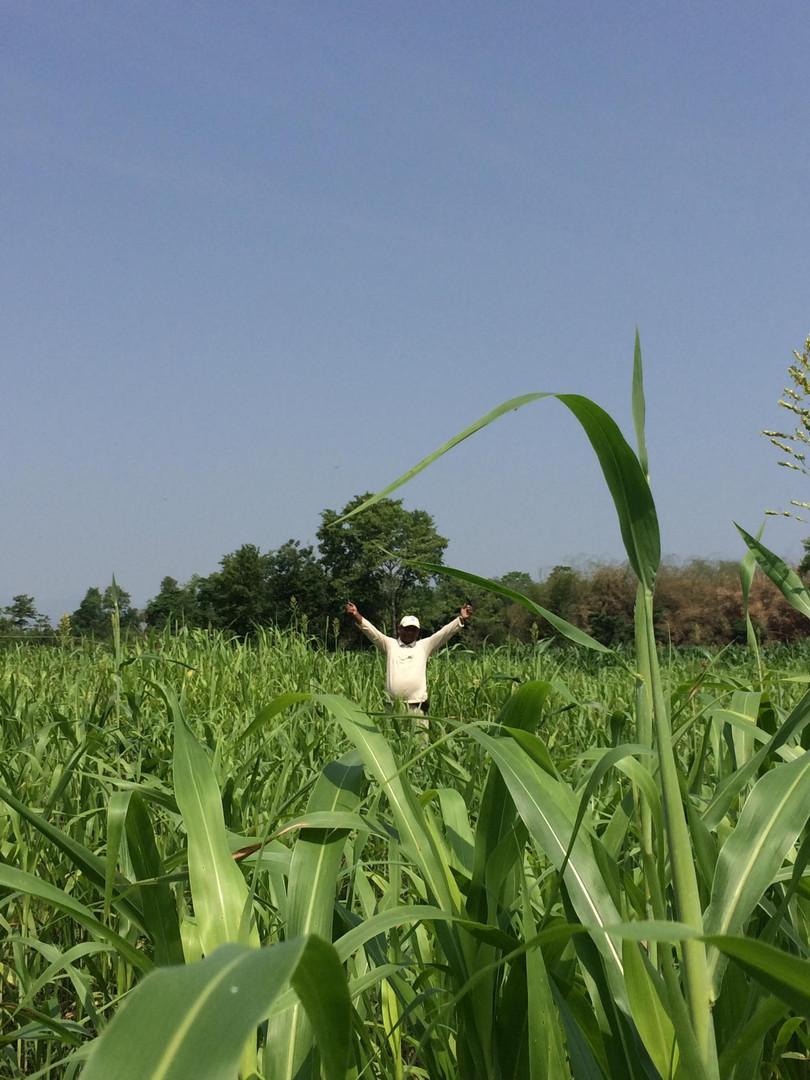 JAMUNA organic field