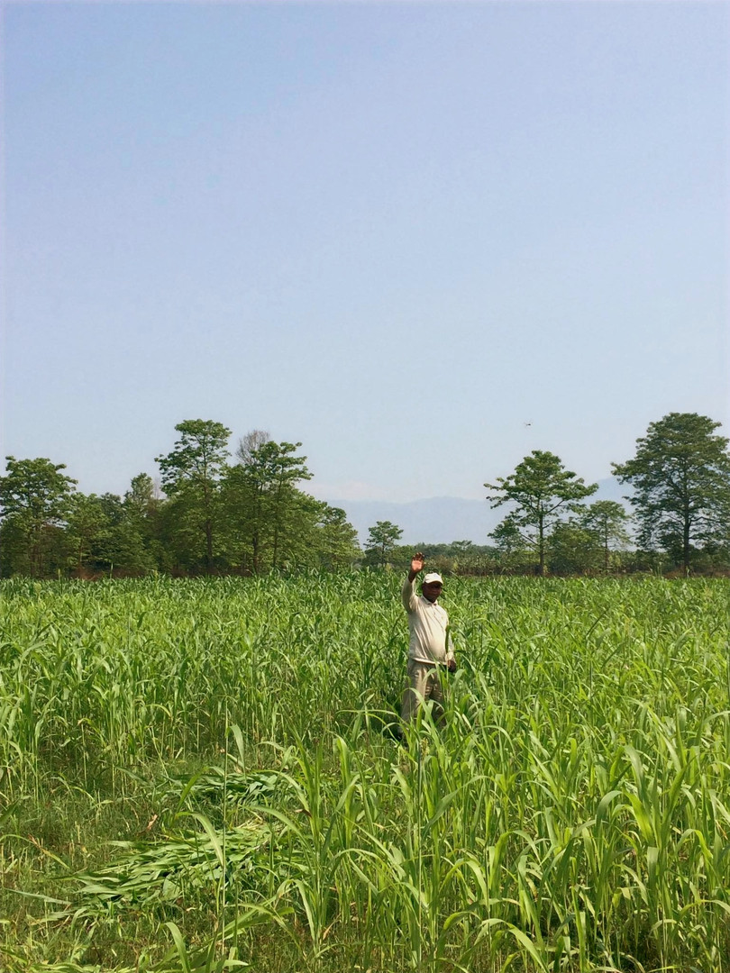 Organic crops nepal