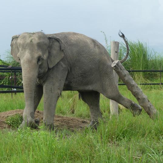 Eva stand Up 4 Elephants.JPG