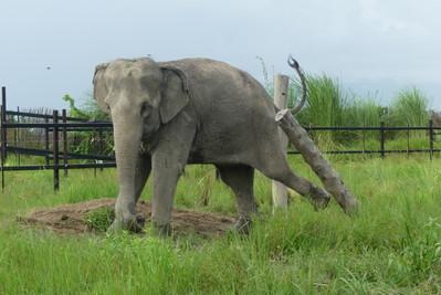 Eva stand Up 4 Elephants