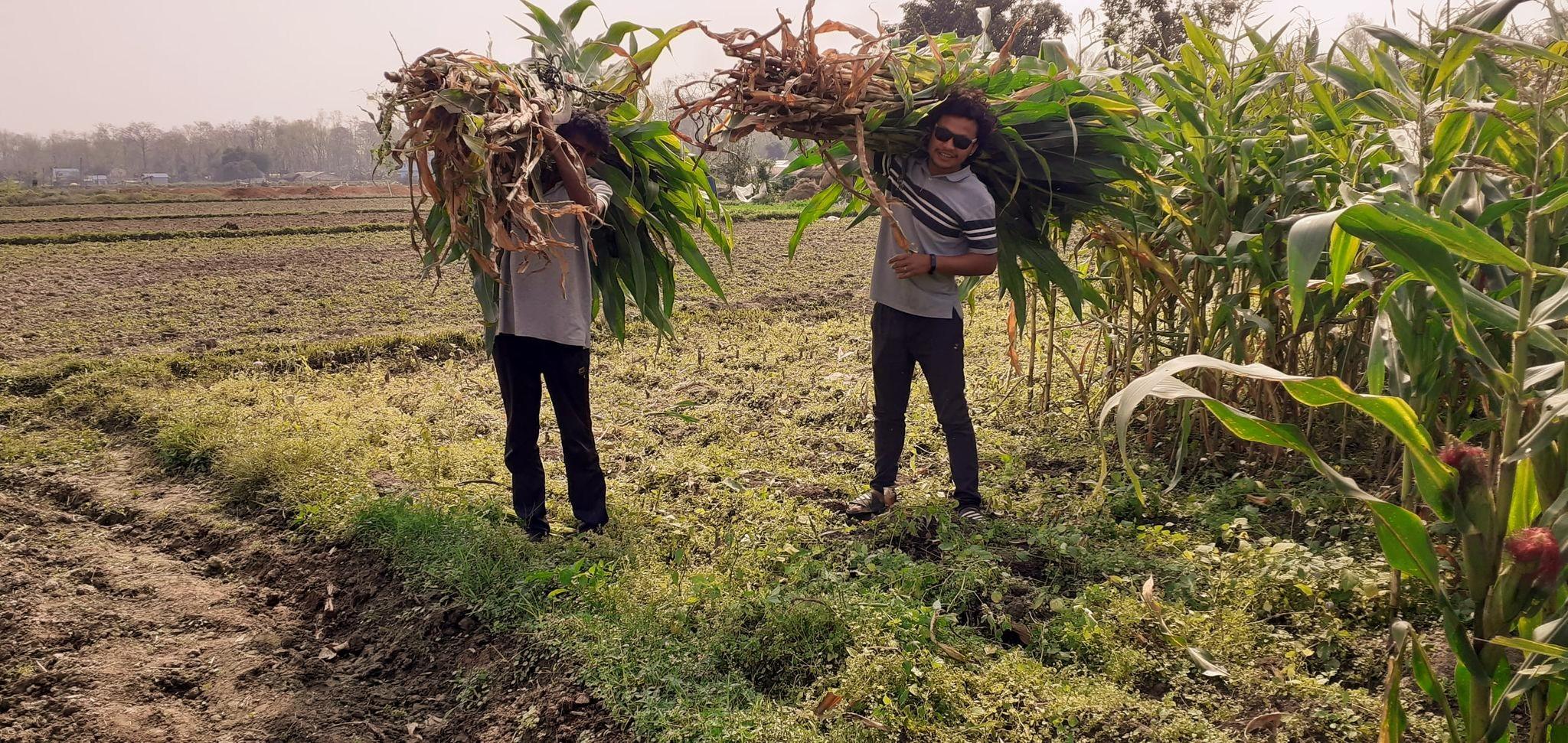 organic farming nepal