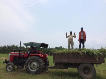Organic farming Nepal su4e
