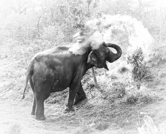 su4e elephant happy hour .jpg