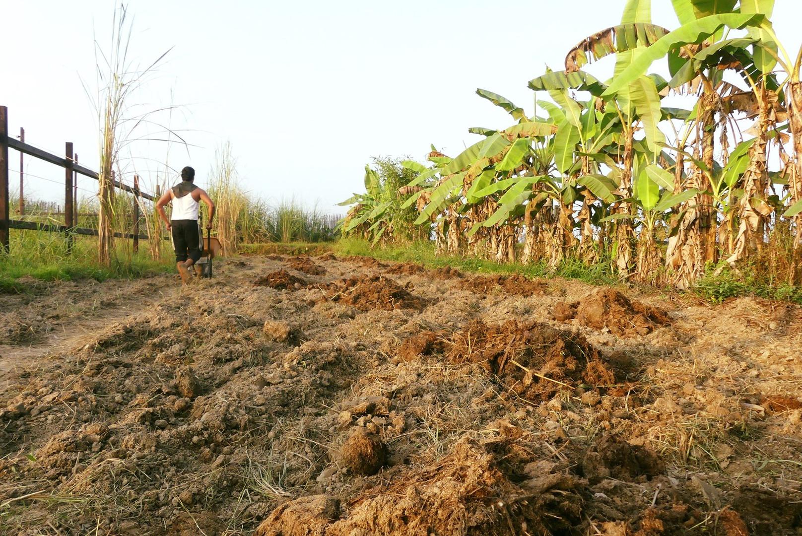 spread elephant poo compost nepal