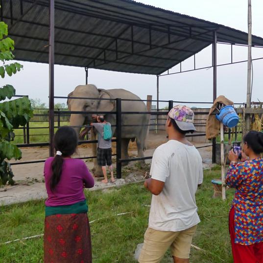 observingf elephant.jpg