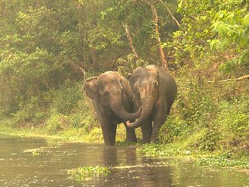 Eva Lhamo SU4E Nepal Elephants