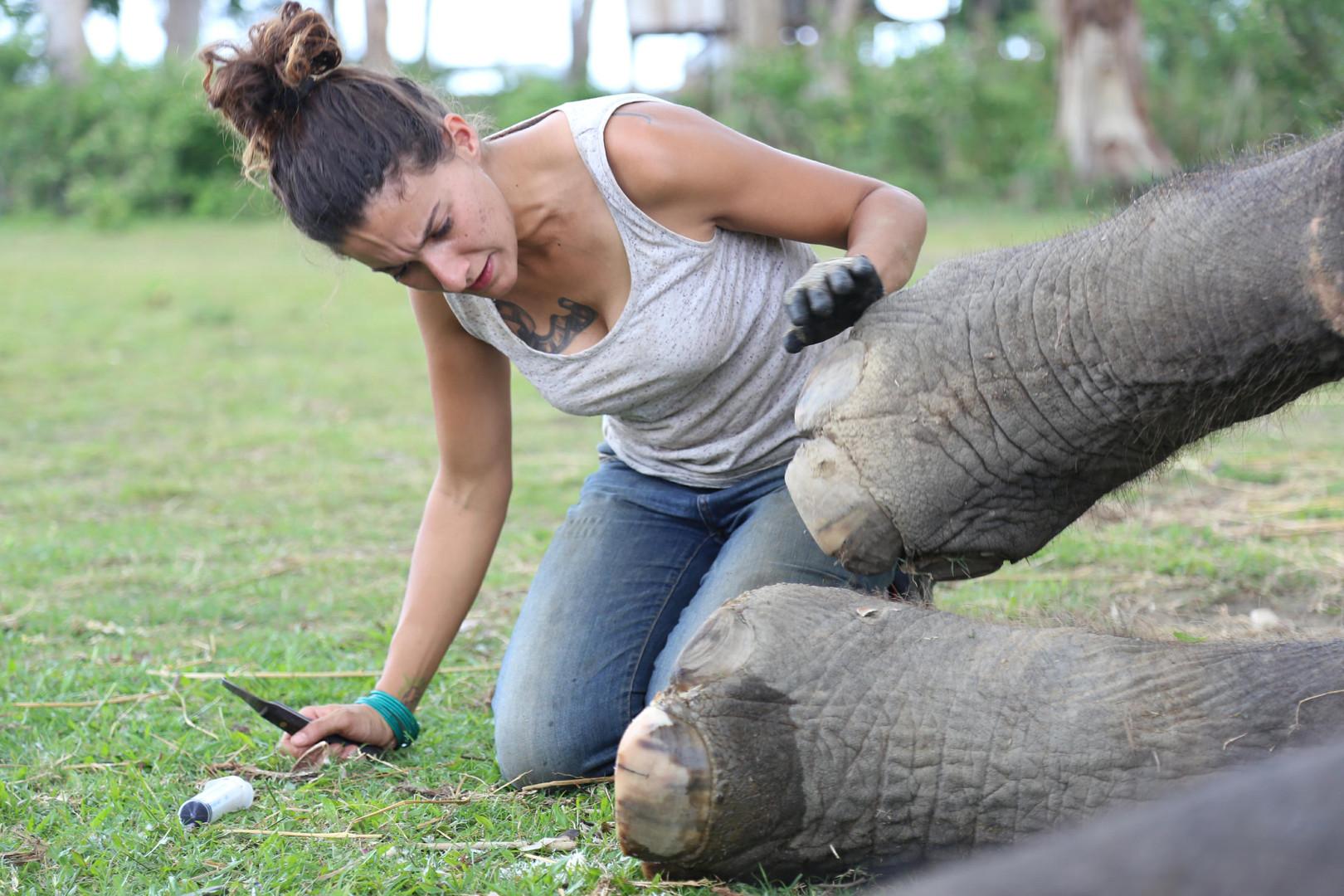 Foot care elephant Nepal