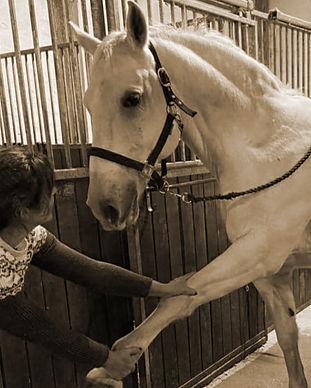 behandling af hest2.jpg