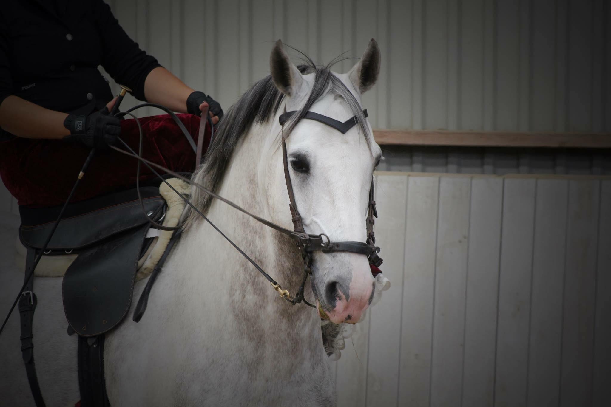 Modul III: Hele hesten