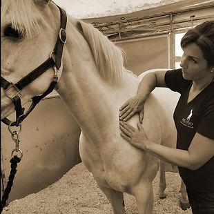 behandling af spring pony.jpg