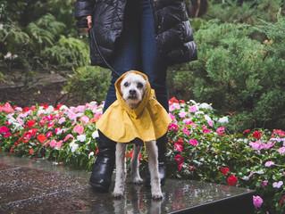 Protege a tu perrito en época de lluvia.